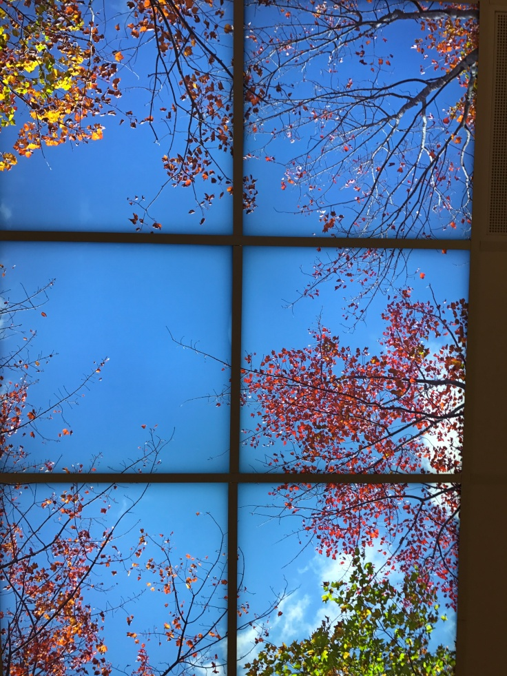 Backlit ceiling panels decorated with trees